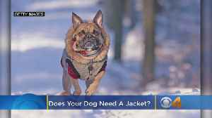 Colorado Weather: Does Your Dog Need A Jacket? [Video]