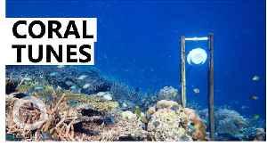Underwater loudspeakers could help boost coral reef recovery [Video]
