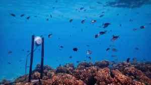 Underwater Speakers Could Help Revive Dying Coral Reefs [Video]