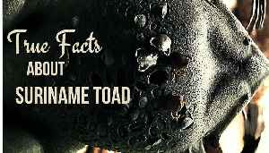True Facts About The Suriname Toad [Video]