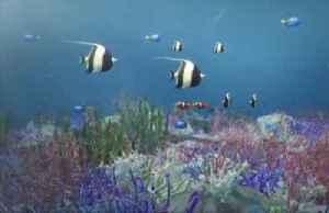 News video: Underwater loudspeakers could help boost coral reef recovery