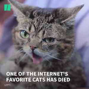 Lil Bub, One Of The Internet's Favourite Cats, Has Died [Video]
