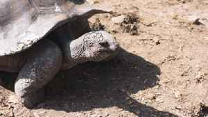 Giant Tortoises Can Remember Training For Nearly a Decade [Video]