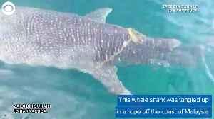 WEB EXTRA: Fishermen Help Whale Shark [Video]
