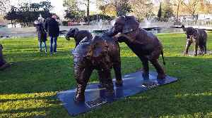 Politicians attend unveiling of 21 life-sized bronze elephants at Marble Arch, London [Video]
