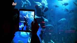 Paris Aquarium Introduces Scuba Diving Santa To Educate Children About Climate Change [Video]