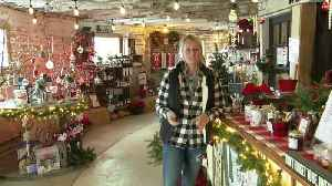Once a dairy farm, now a holiday destination in North Collins [Video]