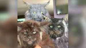 Bizarre footage shows a collection of kitties that appear to have HUMAN faces [Video]