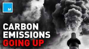 News video: 2019 is now recorded for having the highest level of carbon emissions