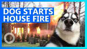 Dog nearly burns the house down after turning on microwave [Video]
