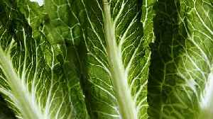 Over 100 Cases Reported In E. Coli Outbreak Linked To Romaine Lettuce [Video]