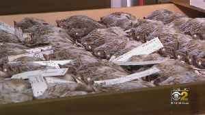 Dead Birds Provide Evidence Of Climate Change [Video]