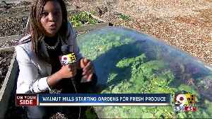 In food desert, Walnut Hills residents turn to gardening [Video]