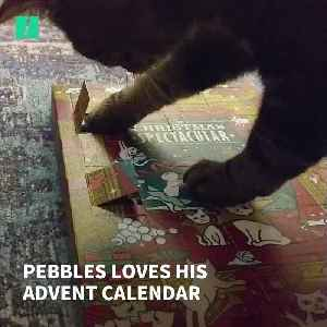 A Purrfect Review Of Lily's Kitchen Advent Calendar – By My Cat [Video]