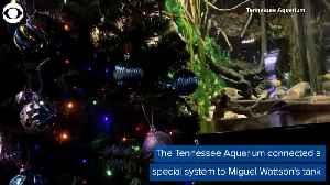 WEB EXTRA: Electric Eel Turns On Christmas Tree Lights [Video]