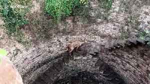Forest department officials haul out antelope from 60-foot step-well in central India [Video]