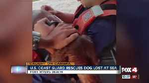 U.S. Coast Guard rescues dog lost at sea [Video]