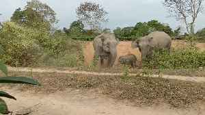 Herd of stampeding wild elephants chase after forest workers in east India [Video]