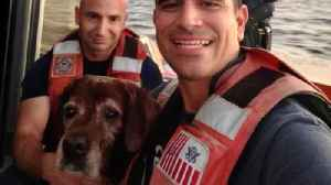 Watch: Coast Guard Crew Out For Training Rescues Distressed Dog Swimming At Sea [Video]