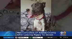 N.J. Man Convicted Of Animal Cruelty [Video]