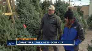 Real Christmas trees will cost you more this year [Video]