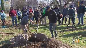 1 Shovel Of Dirt At A Time: New Efforts In Place To Replant Dallas Trees [Video]