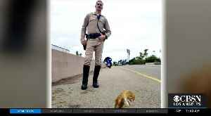 CHP Officers Save Owl Found On 101 Freeway In Santa Barbara [Video]