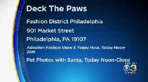 CBS3 Pet Project: PSPCA In Need Of Holiday Donations [Video]