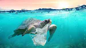 Hawaiian Island Passes Sweeping Single-Use Plastic Ban [Video]