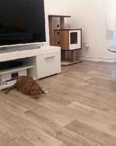 Cat immediately reacts with impressive jump [Video]