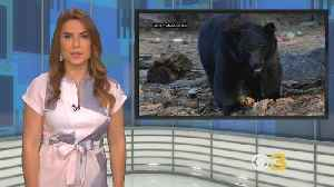 Second Phase Of New Jersey's Bear Hunt Off To A Wet Start [Video]