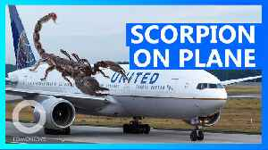 Woman stung by scorpion on United Airlines flight [Video]