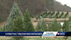 Costly Christmas trees in high demand [Video]