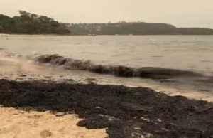 Bushfire ash turns Sydney beach sand black [Video]