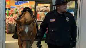 Police horse enters pet store [Video]