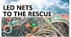 LED fishing nets save turtles and dolphins [Video]