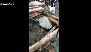 Sea turtle rescued after being washed onto beach by typhoon in the Philippines [Video]