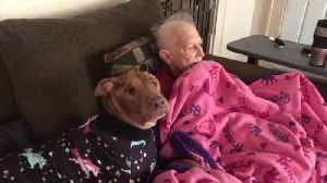 Sweet doggy watches cartoons with grandma [Video]