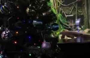Electric eel lights up Christmas at U.S. aquarium [Video]