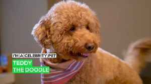 """I'm a Celebrity Pet! Teddy is officially """"most huggable"""" on Instagram [Video]"""