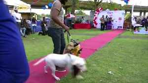 The Catwalk Turns Into Dogwalk As Nigeria Holds First Ever Dog Carnival! [Video]