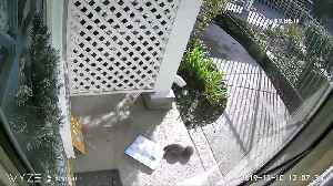 WATCH: Squirrel caught stealing package outside apartment [Video]