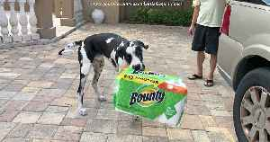 Great Dane has unique style of paper towel delivery [Video]