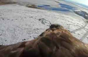 Golden eagles glide among snow-covered Kazakh mountains [Video]