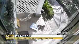 Porch pirate squirrel caught stealing package in Los Angeles [Video]