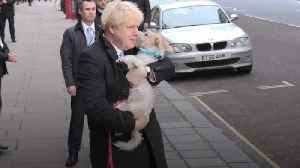 Dogs at polling stations steal limelight on election day [Video]