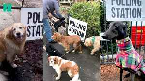 Dogs At Polling Stations [Video]