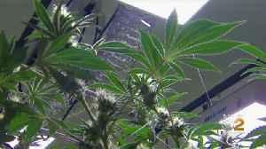 N.J. To Hold Hearing On Marijuana Vote [Video]