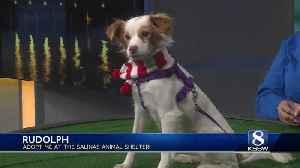 KSBW Pet of the Week: Rudolph! [Video]