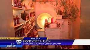 Honeybee museum in Orland looks to educate and attract visitors [Video]